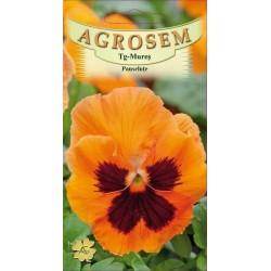 Panselute portocalii seminte - Viola witrockiana