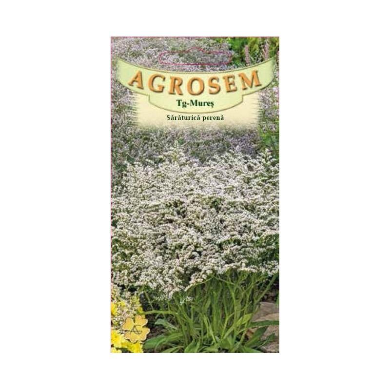 Saraturica alba perena seminte - Limonium tataricum