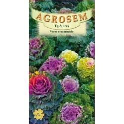 Varza ornamentala seminte - Brassica oleracea mix