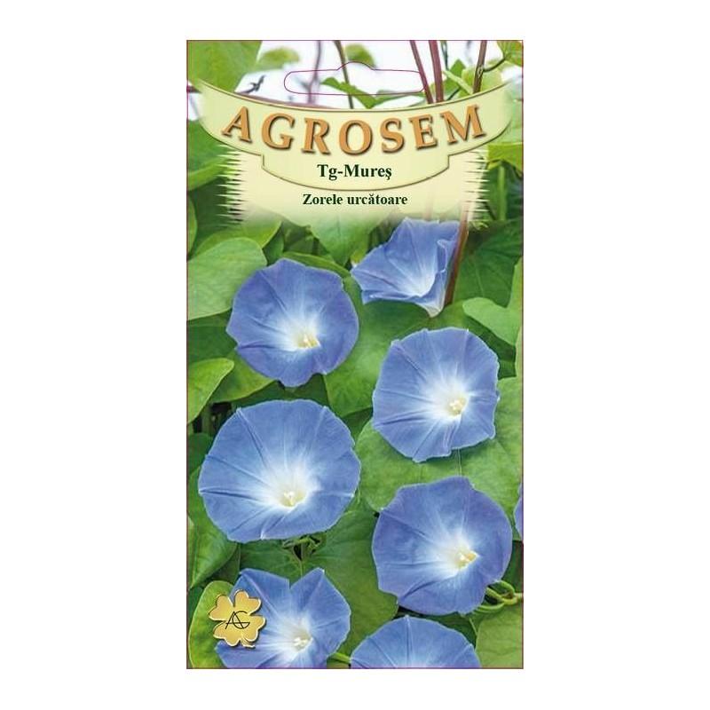 Zorele urcatoare albastre seminte - Ipomoea purpurea Blauer Himmel