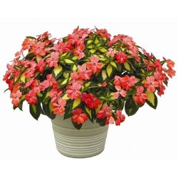 Impatiens Sunpatiens Spreading Salmon variegated G-9