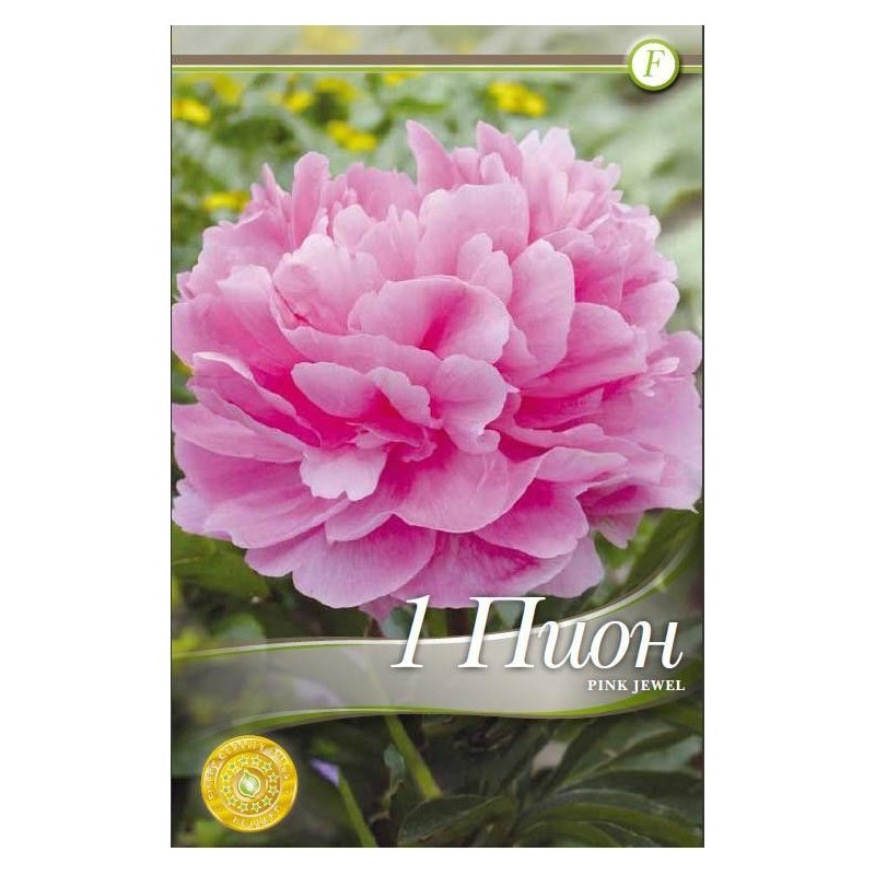 Bujor bulbi - Paeonia Pink Jewel