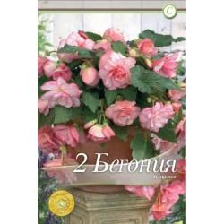 Begonia bulbi Cascade Florence