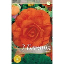 Begonia bulbi Double Orange