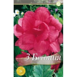 Begonia bulbi Double Pink