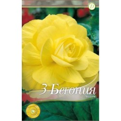 Begonia bulbi Double Yellow