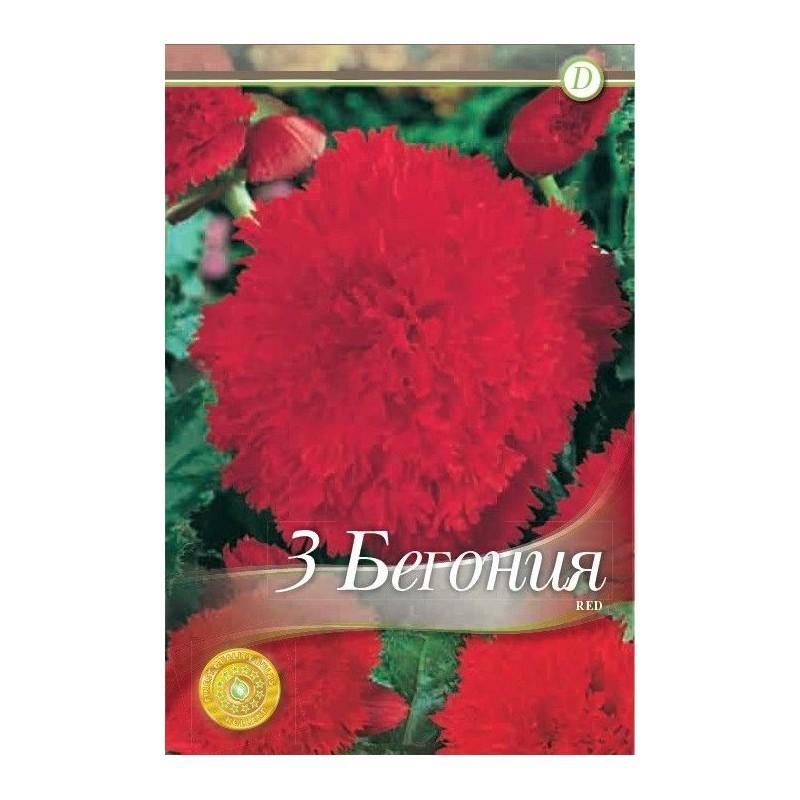 Begonia bulbi Frimbiata Red