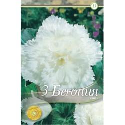 Begonia bulbi Frimbiata White