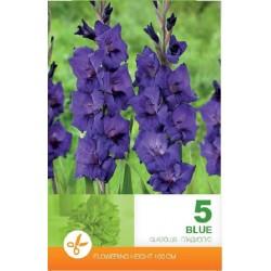 Gladiole bulbi Blue