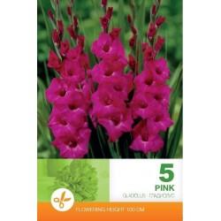 Gladiole bulbi Pink