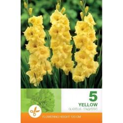 Gladiole bulbi Yellow