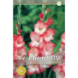 Gladiole bulbi Pink Lady