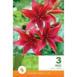 Lilium asiatic Red - 3 bulbi