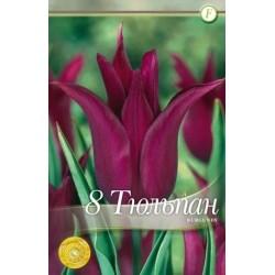 Tulipa Burgundy