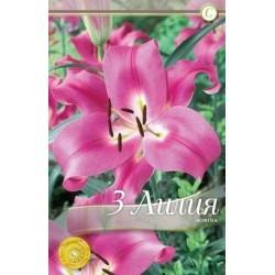 Lilium oriental Robina