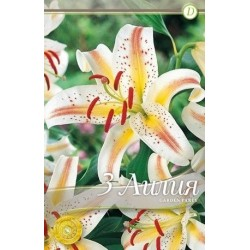 Lilium oriental Garden Party