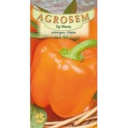 Ardei gras seminte - Capsicum annuum Etiuda