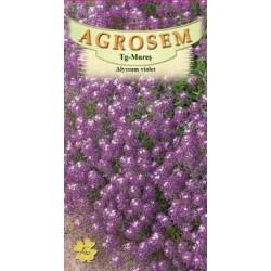 Alyssum violet seminte - Lobularia maritima Violet