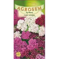 Coada soricelului seminte - Achillea millefolium mix