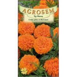 Craite pitice cu flori mari seminte - Tagetes erecta nana