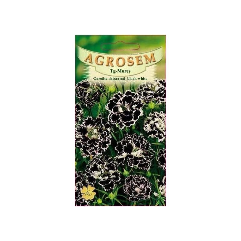 Garofite chinezesti black-white seminte - Dianthus chinensis Black-White