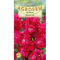 Mixandre rosii seminte - Matthiola incana Red