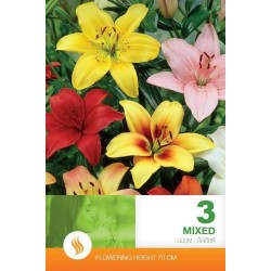 Lilium asiatic Mix - 3 bulbi