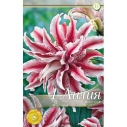 Lilium Magic Star