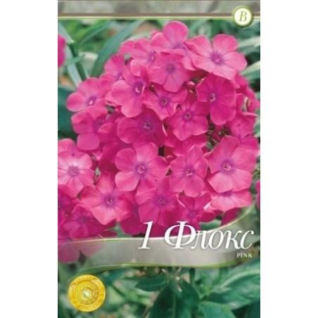Phlox paniculata Pink - 1 radacina