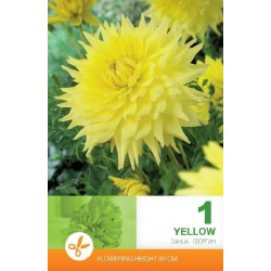 Dalia decorativa Yellow