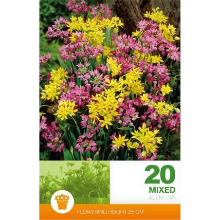 Allium mix - 20 bulbi