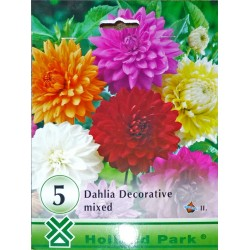 Dahlia decorativa mix