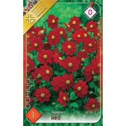 Dahlia Topmix Red