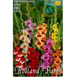 Gladiole Butterfly mix
