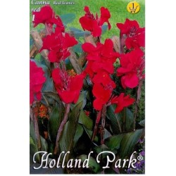 Canna indica Red/Red
