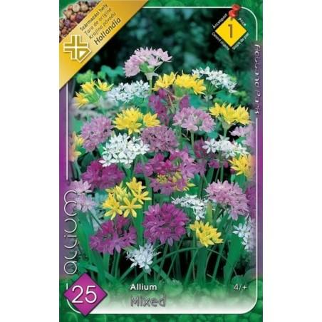 Allium mix - 25 bulbi KM