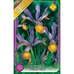 Iris hollandica Frans Hals