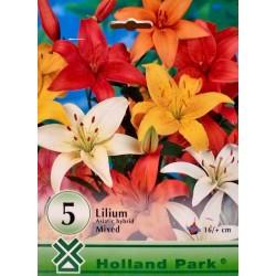 Lilium asiatic mix