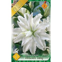 Lilium double oriental Innocent Lady