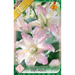 Lilium double oriental Soft Music