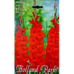 Gladiole Red