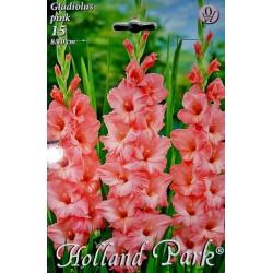 Gladiole Pink