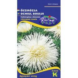 Callistephus chinensis Strahlenaster white