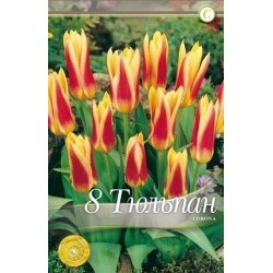 Tulipa Corona
