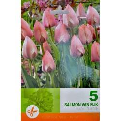 Tulipa Salmon Van Eijk