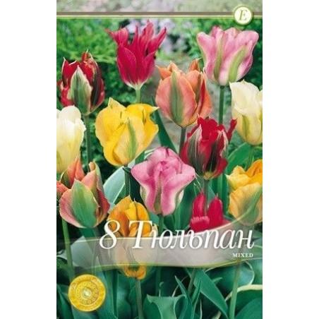 Tulipa Viridiflora mix