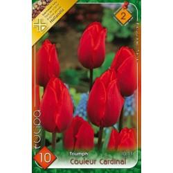 Bulbi lalele Couleur Cardinal