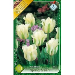 Bulbi lalele Spring Green
