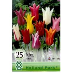 Bulbi lalele Lily flowered mix