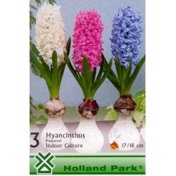 Hyacinthus prepared mix